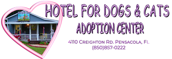 Hotel for Dogs & Cats